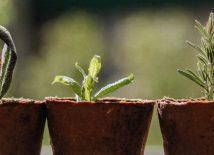 Ben jij een visionair, democratiseerder of herbenutter? 3 verschillende groeistrategieën